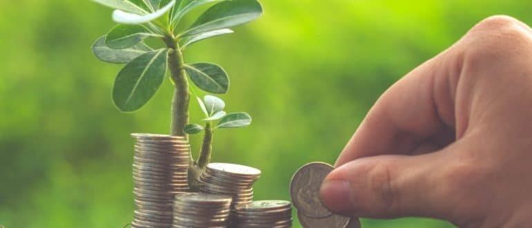 Куда выгодно новичку инвестировать небольшую сумму